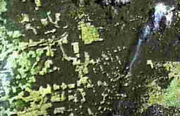Photo satellite d'un incendie en Amazonie